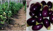 कृषि – ऋषि आश्रम